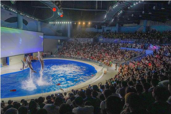 日照海洋公园开业一周年,缤纷活动引爆盛夏海洋旅游热潮